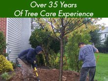 Tree trimming - Oshkosh, WI - Best Quality Tree Service - Over 35 Years Of Tree Care Experience