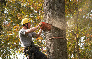 stump grinding | Macon, GA | Greg's Tree & Stump Removal Inc. | 478-225-4543