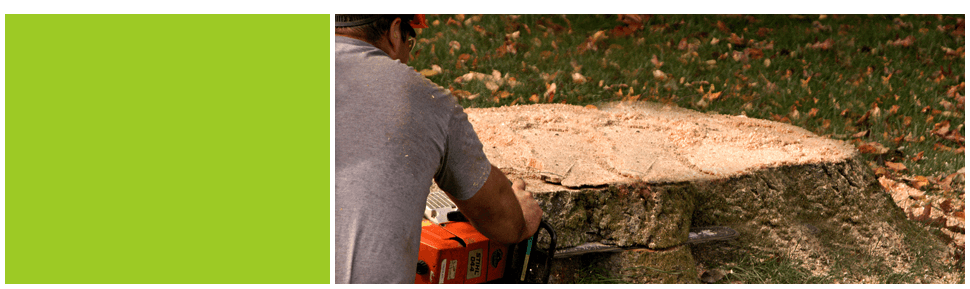 limb cutting | Macon, GA | Greg's Tree & Stump Removal Inc. | 478-225-4543