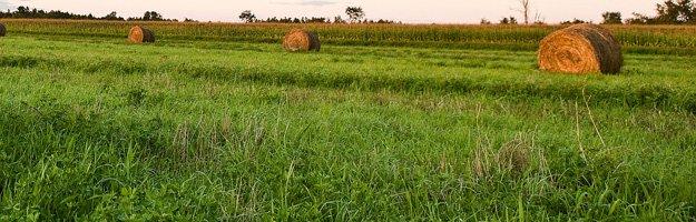 Hay Grower Insurance
