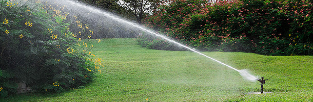 Sprinkling lawn