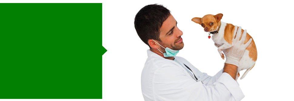 Veterinary Surgery | Tigard, OR | Canterbury Animal Hospital | 503-620-1300