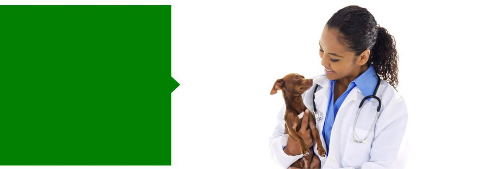 Animal Hospital | Tigard, OR | Canterbury Animal Hospital | 503-620-1300