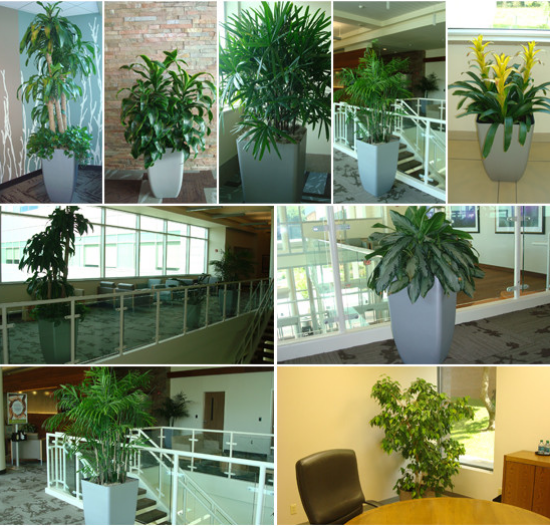 Interior Plantscaping Services