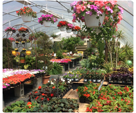 Sales and Special Events | An Eastridge Garden | Centreville, MD | 410-758-3650