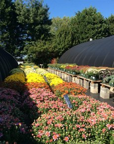 Homegrown plants | Centreville, MD | An Eastridge Garden | 410-758-3650