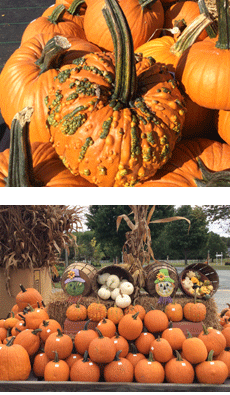 Pumpkins | Centreville, MD | An Eastridge Garden | 410-758-3650