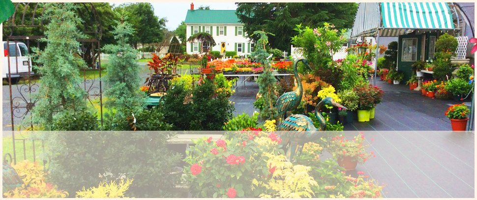 Plant Nursery | Centreville, MD | An Eastridge Garden | 410 758 3650