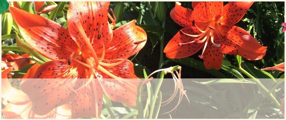Pottery | Centreville, MD | An Eastridge Garden | 410-758-3650
