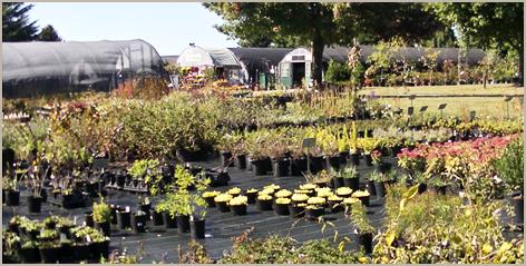 Perennials nursery | Centreville, MD | An Eastridge Garden | 410-758-3650