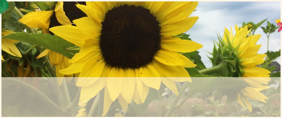 Centreville, MD | An Eastridge Garden | 410-758-3650