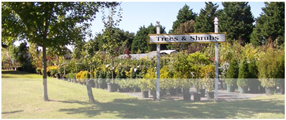 Plant nursery | Centreville, MD | An Eastridge Garden | 410-758-3650
