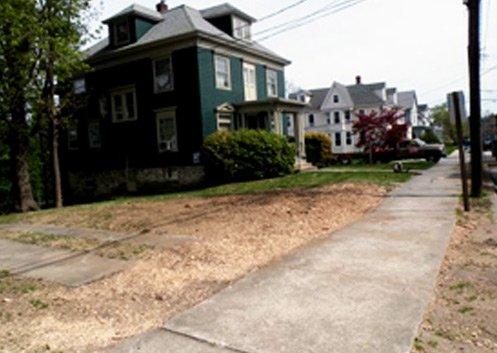Stump removal service