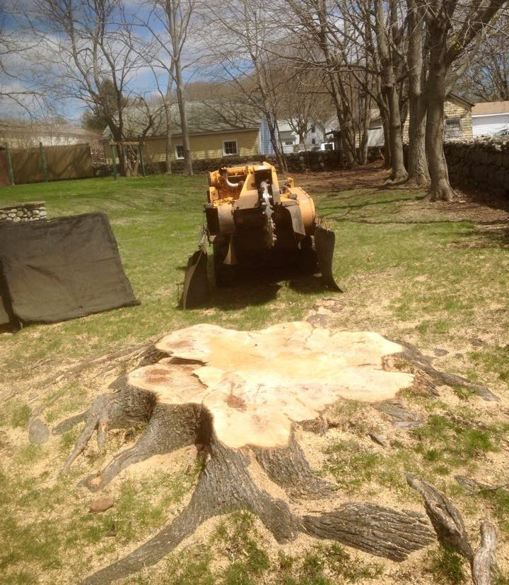 Tree stump grinding service