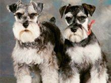 Pet Care - Visalia, CA - CC's Pet Salon