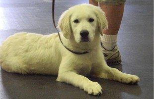 puppy training | Wilkes Barre, PA | K-9 Korner Inc | 570-829-8142