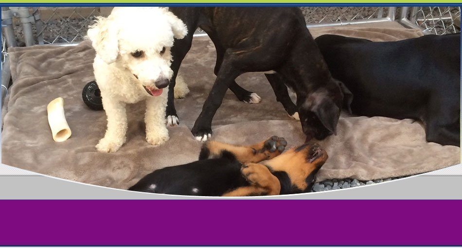 pet day care   Wilkes Barre, PA   K-9 Korner Inc   570-829-8142