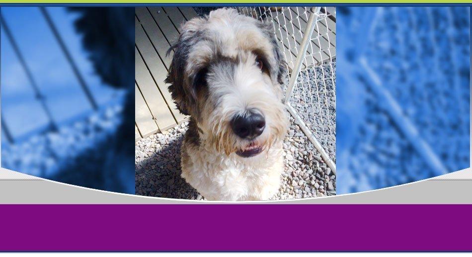 pet training | Wilkes Barre, PA | K-9 Korner Inc | 570-829-8142
