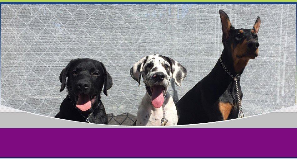 dog training   Wilkes Barre, PA   K-9 Korner Inc   570-829-8142