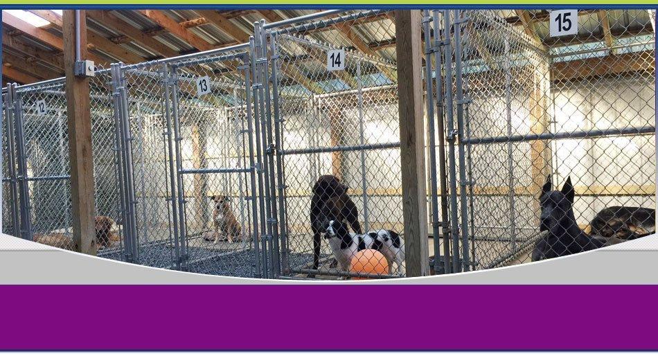 pet boarding | Wilkes Barre, PA | K-9 Korner Inc | 570-829-8142