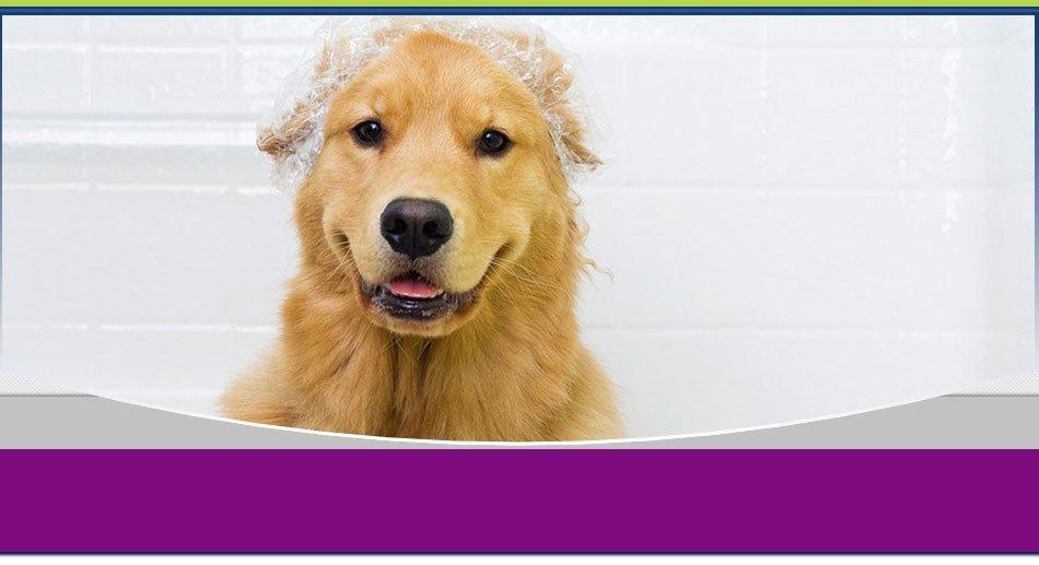 pet haircuts | Wilkes Barre, PA | K-9 Korner Inc | 570-829-8142