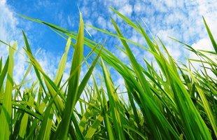 Landscape Maintenance & Care Spokane WA   Weed and lawn mower - Spokane Pro Care