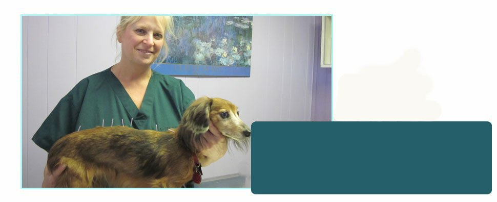Animal surgery | Blauvelt, NY | Rockland Holistic Veterinary Care PC | 845-348-7729